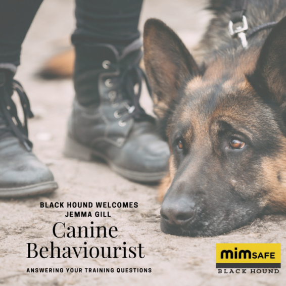 canine-behaviour-4