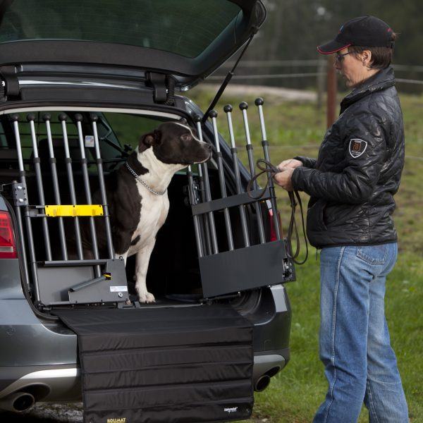 grind i bil med hund 2